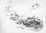 09.genangan air dan katak