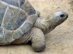 800px-Aldabra.giant.tortoise.arp