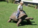 800px-Child_riding_tortoise