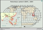 pelochelys_cantorii_range_v_niclos_www_testudines_org_000_000_ful