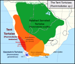 Psammobates_tent_tortoise_species_map_-_Southern_Africa