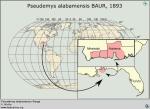 14pseudemys_alabamensis_ran_v_niclos_www_testudines_org_000_000_ful