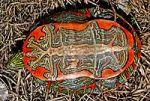 3a200px-B4_Western_painted_turtle_underside