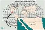 terrapene_coahuila_mapa_de_distribucion2