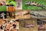 16gekkonidae geckos