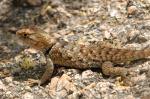 lizard_052805_02