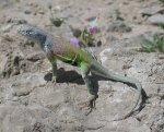 Reptile_tx_usa