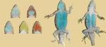 umicroscutatusdisplay65